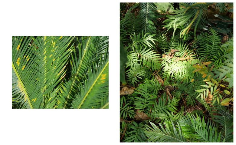 Vert-Plante_Dyptique_1.jpg