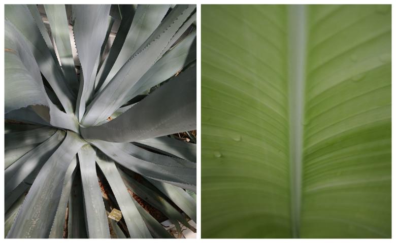 Vert-Plante_4.jpg