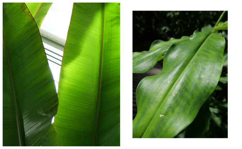 Vert-Plante_Dyptique_8.jpg