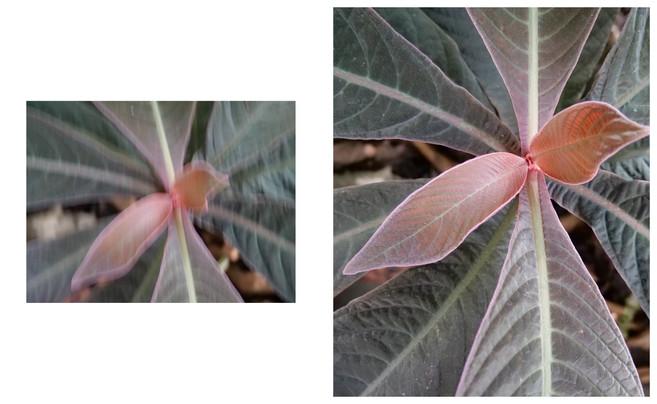 Vert-Plante_Dyptique_12.jpg