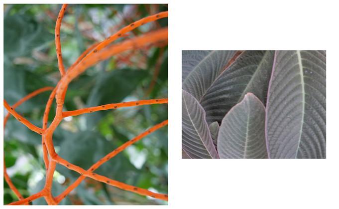 Vert-Plante_Dyptique_9.jpg