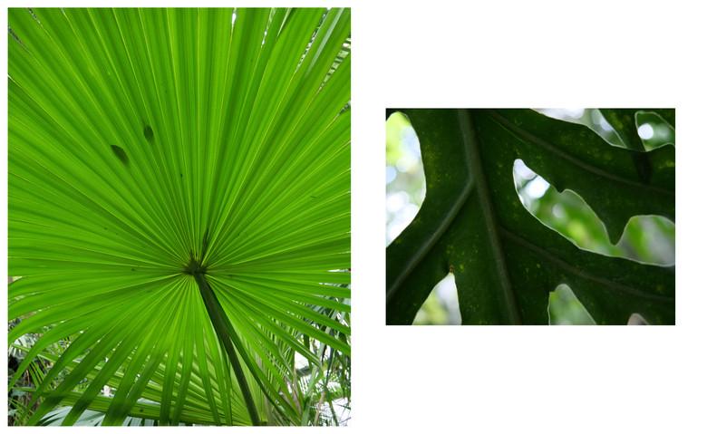 Vert-Plante_Dyptique_10.jpg