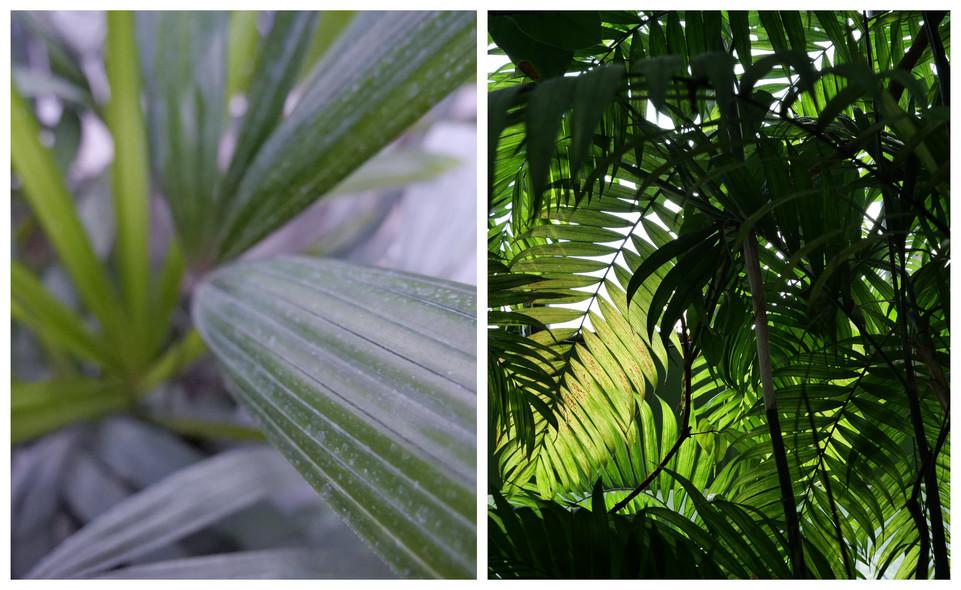 Vert-Plante_2.jpg