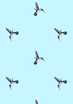 hummingbird_colourways-06.jpg