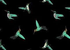 hummingbird_black print_1_edited.jpg