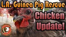 chickenupdatethumb.jpg