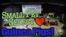 smallpetselectthumb.jpg