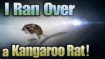 kangaroorat_thumb.jpg