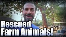 Rescued Farm Animalsthumb.jpg