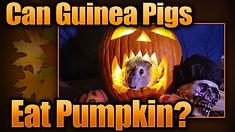 pumpkinthumb.jpg