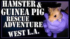 hamsterwestLA.jpg