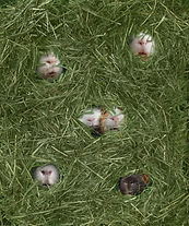 hayshirtsm.jpg