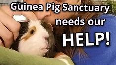 Sanctuary help.jpg