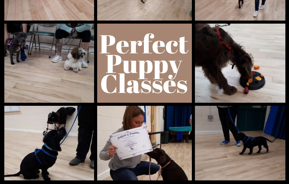 Perfect Puppy Classes (1).png