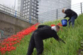 het plukken van de tulpen