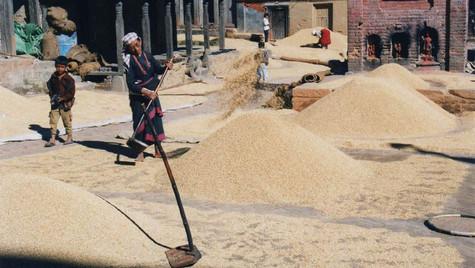 Séchage des céréales dans la rue - Bhaktapur
