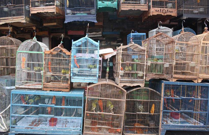 Boutique d'oiseaux Jogjakarta - Java