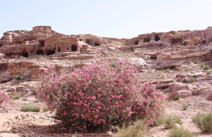 Petra Lauriers en fleurs