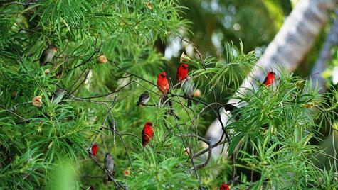 Oiseaux - La Digue