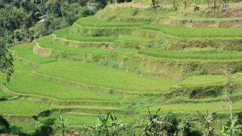 Rizières en espalier - Bali