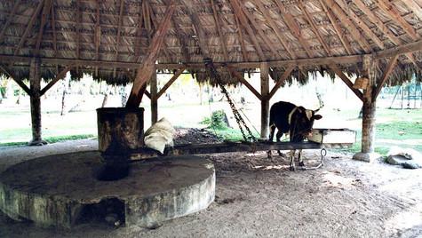 Moulin huile de copra