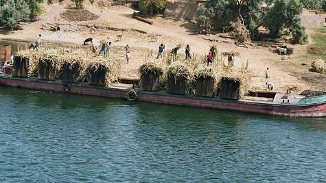 Barge Canne à Sucre