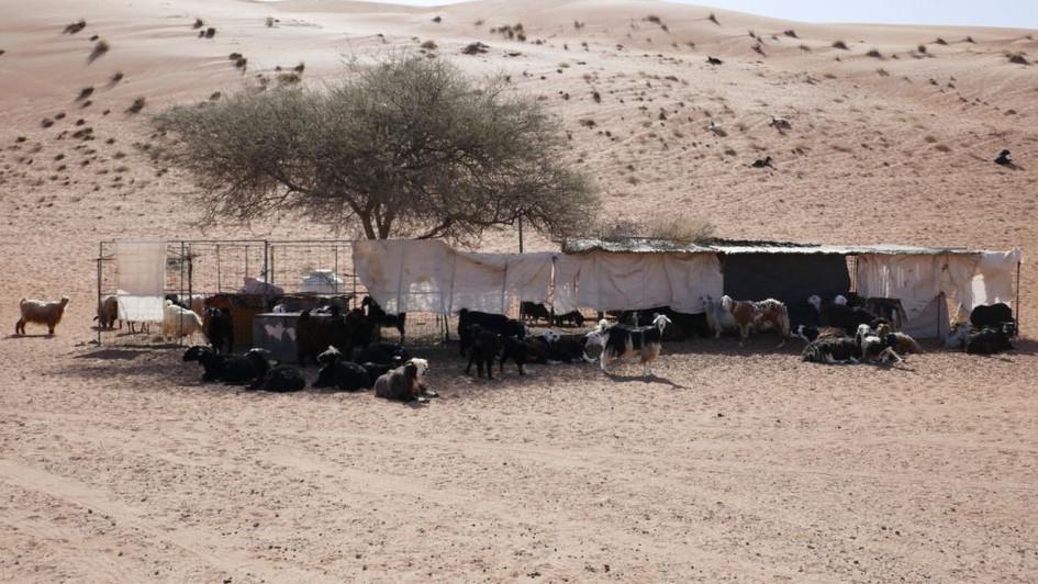 Campement de bédouins