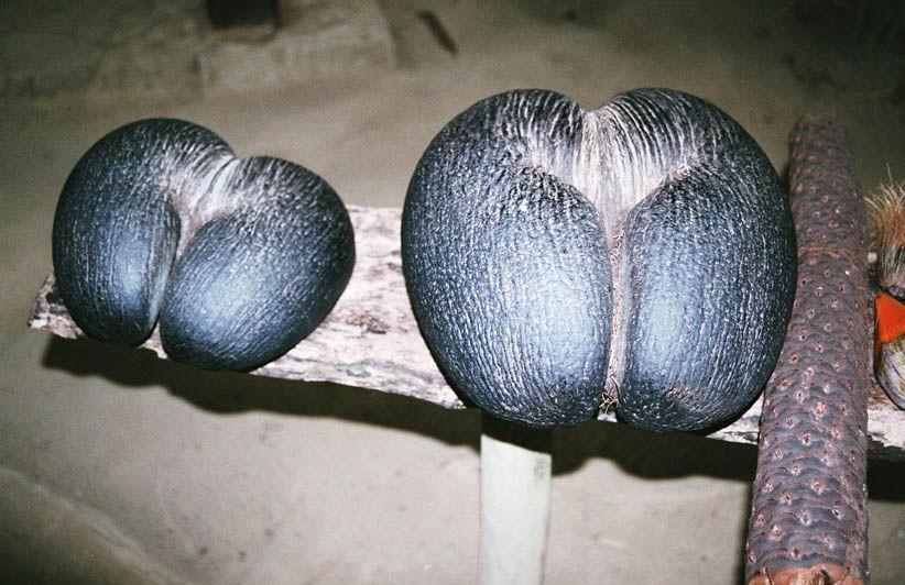Coco-fesses