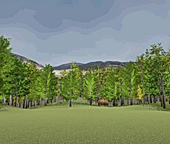 Forest 1.png