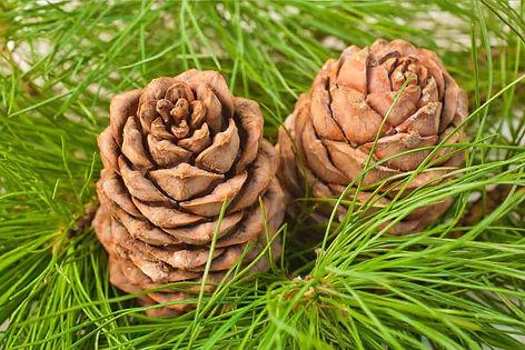 wellnessaromas-aromatherapy-essential-oi