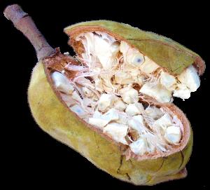 Baoba.png