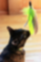 cat with toy.png