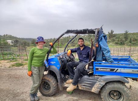 Planting Grapevines at the Castel Near Jerusalem