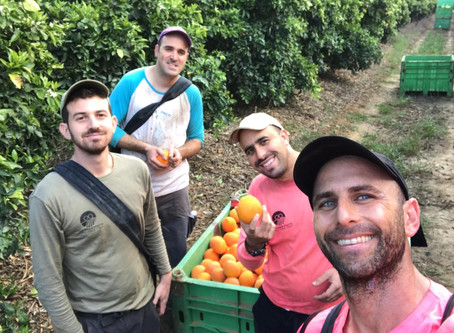 Educators Supporting Israel's Agriculture During COVID-19
