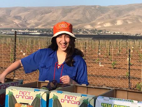 """Everyone Needs to Eat"": Kfar Sava Youth Heed the Call to Help Local Farmers"