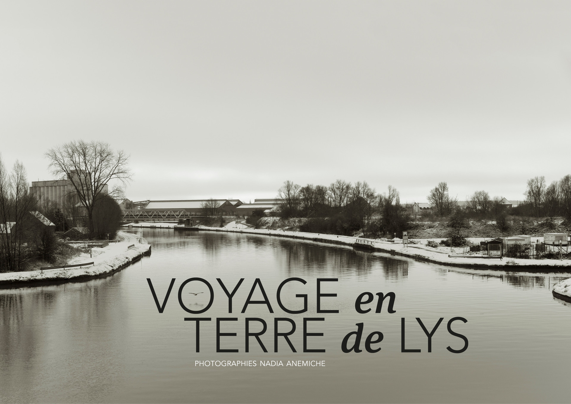 TERRE DE LYS