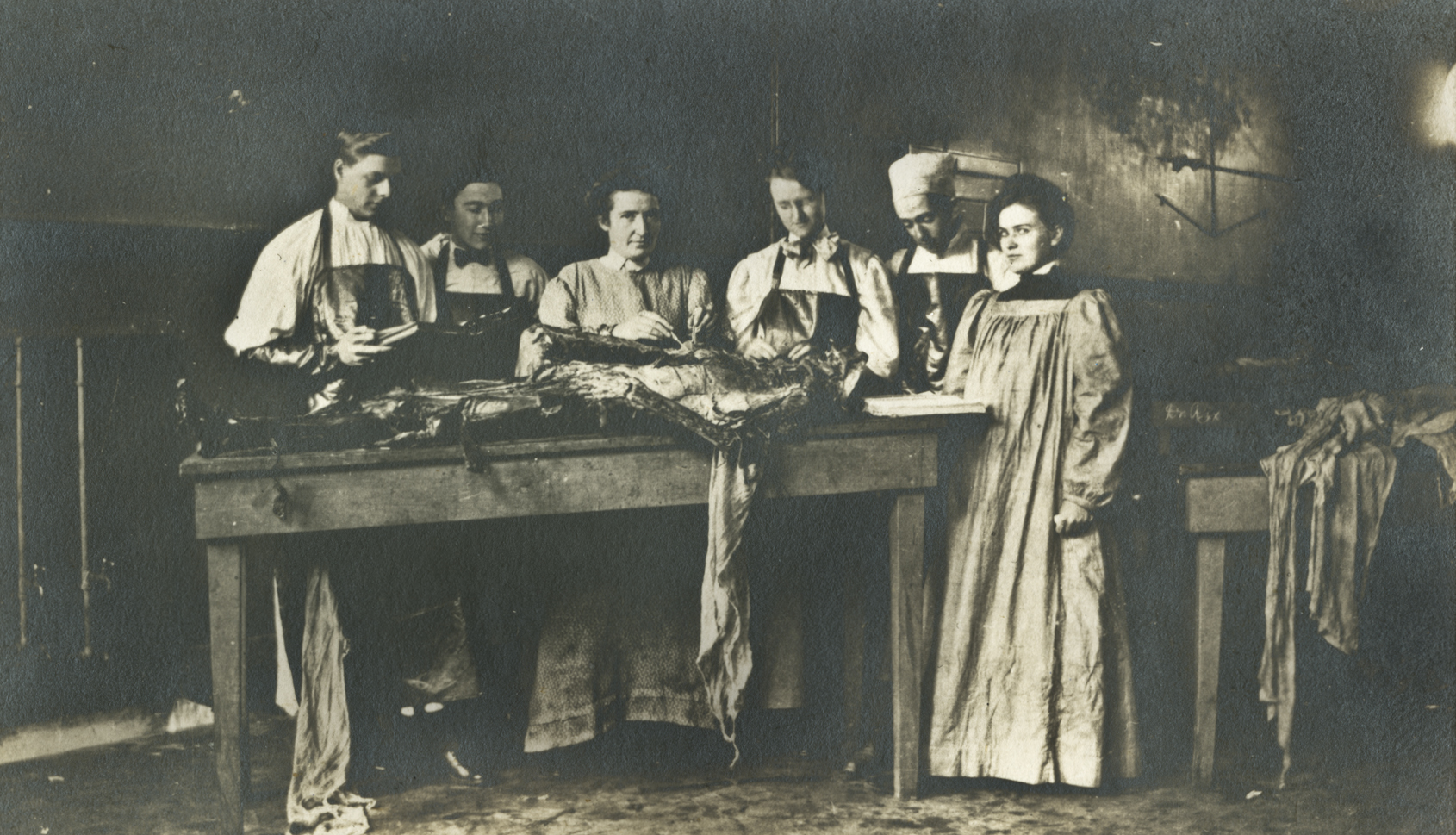 dissectiongroup
