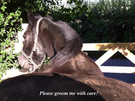 Groom your horse with compassion.