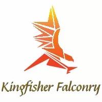 KingfisherFalconry.webp