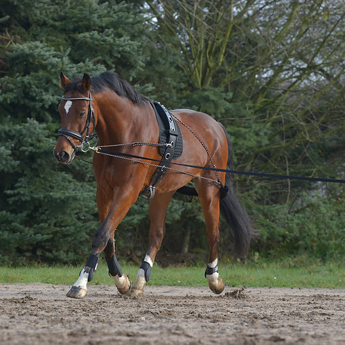 Lunging System