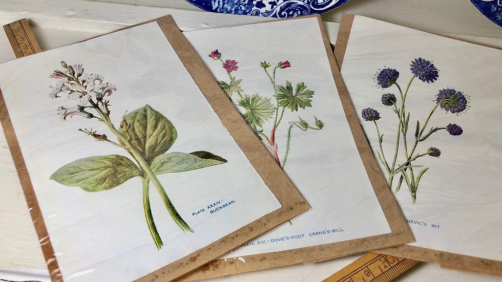 Set of 3 Vintage Botanical Book Prints