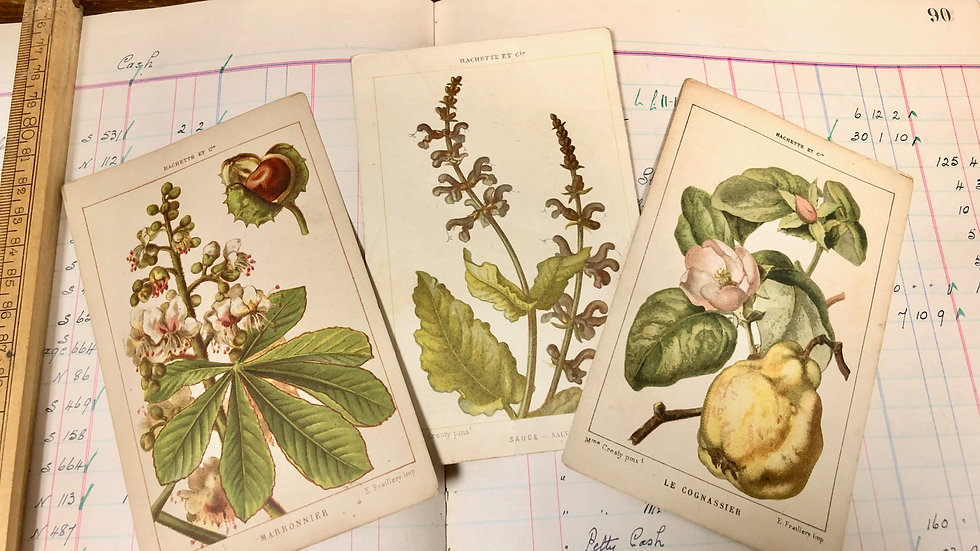 Set of 3 French Botanical Illustration Cards