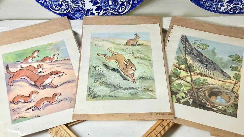 Set of 3 Vintage Book Prints from 1940s by Eileen Soper