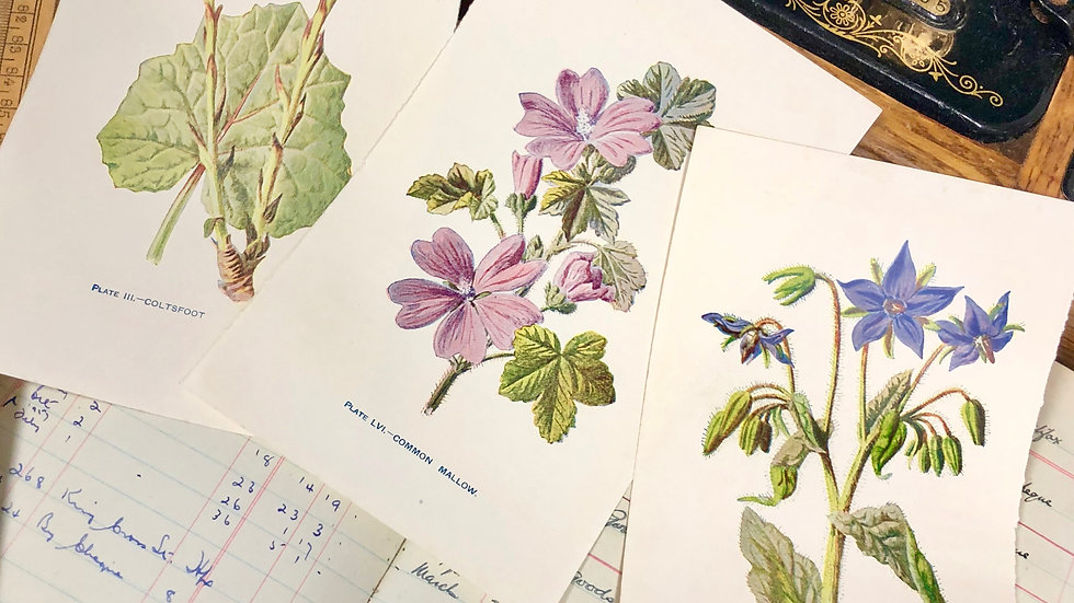 Vintage Botanical Book Prints x 3 per set