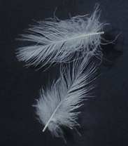feathers.png