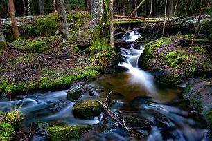 Forest%20stream_edited.jpg