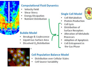Integration of Fluid Dynamics and Cellular Activities in Modeling of Bioreactors
