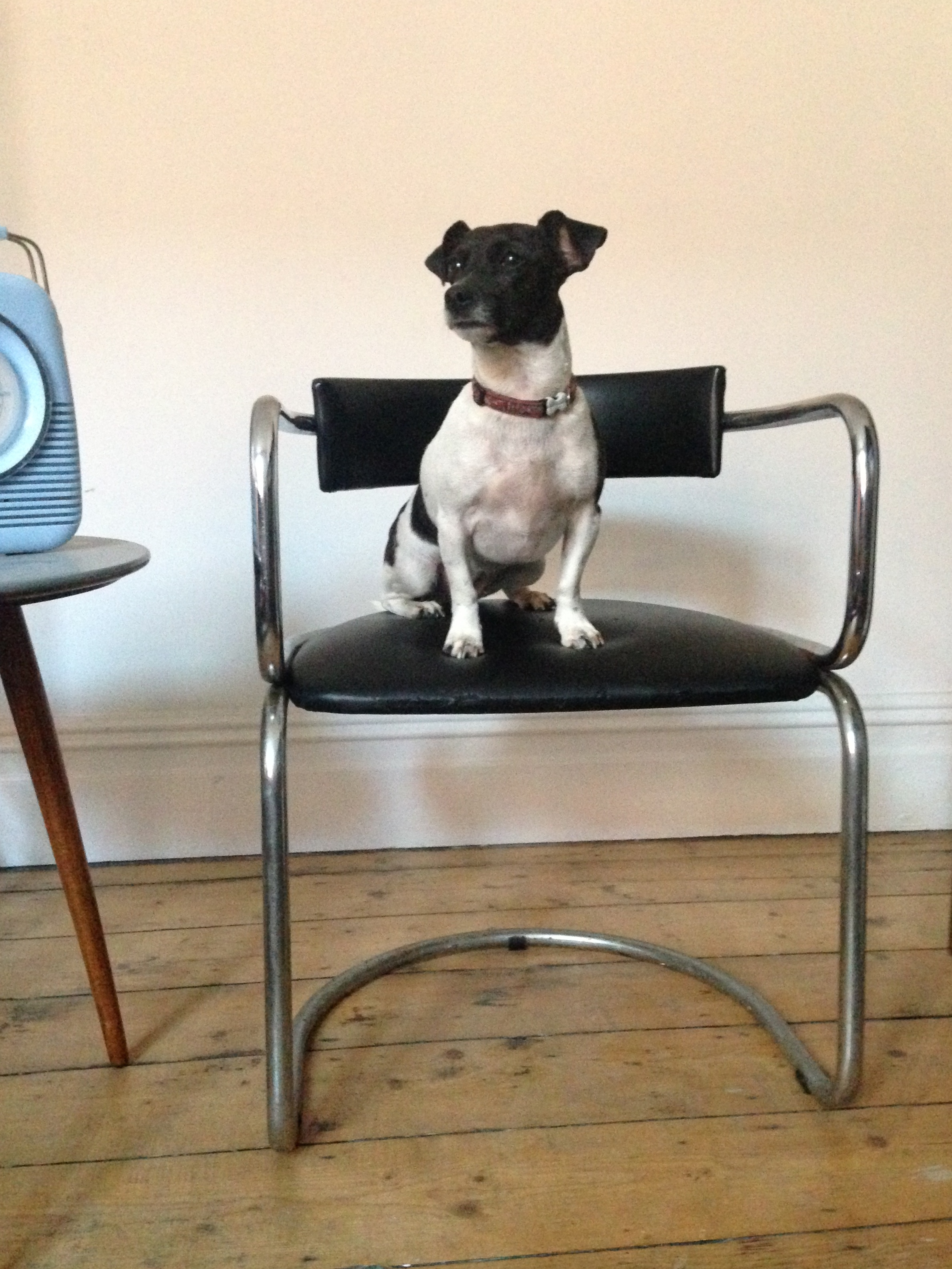 bad-dog-studio-jpg