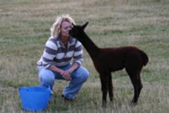 Keeping Alpacas is such a joy
