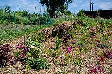 garden8 (1).JPG